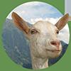 pinsos ecològics caprí oví