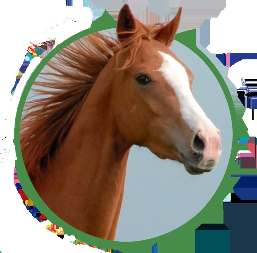 pienso ecologico para caballos