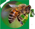 piensos ecológicos abejas