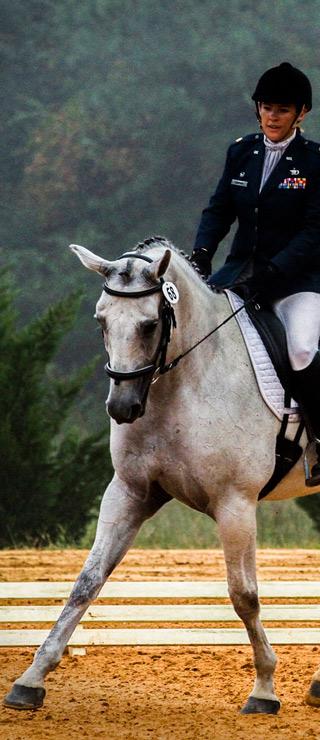 pienso para caballos