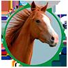 pinsos ecològics cavalls